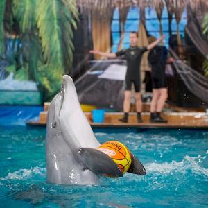 Дельфинарии, океанариумы Никольского