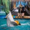 Дельфинарии, океанариумы в Никольском